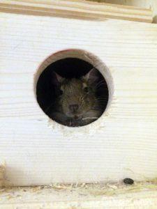 Fenster im Schlafhäuschen