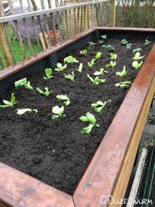 Hochbeet bepflanzt2