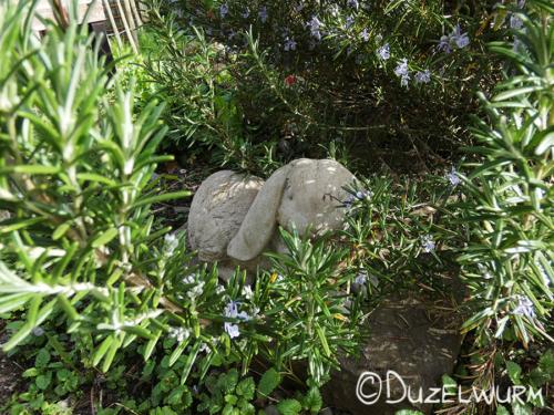 Unser Kräuterschneckenhüter versteckt sich hinter einem Rosmarinast